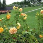 pm-rose garden 05