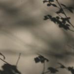 shade screen 02