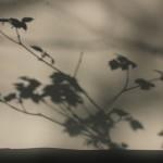 shade screen 03