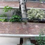 tree building 01