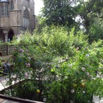 cluny garden 02